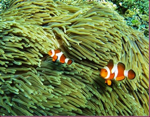 boracay snorkeling nemo