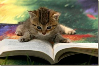 Cat-CatReadingBook03