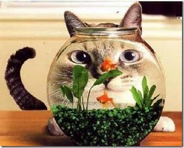 gato pecera