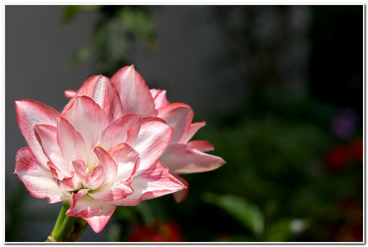 宿舍大門的花