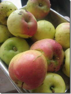 5 - 6 äpplen...