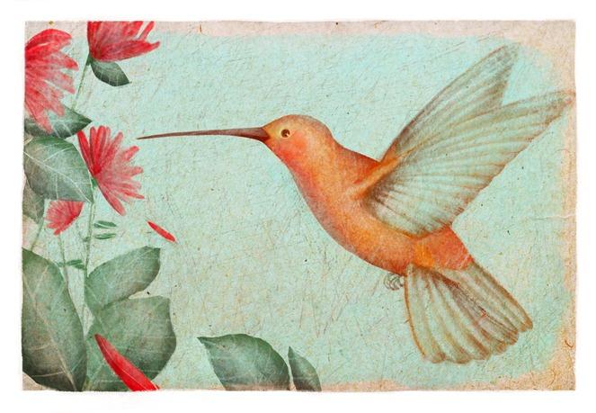 открытка колибри