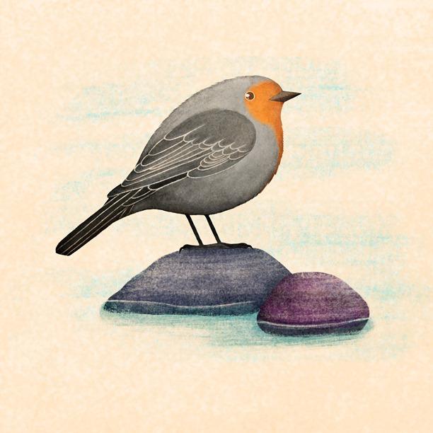 The bird on a rock
