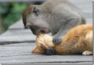 monkey_n_cat1