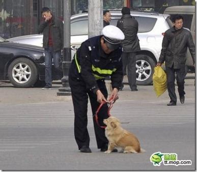 Karena Melanggar, Anjing ini meyerahkan diri kepolisi