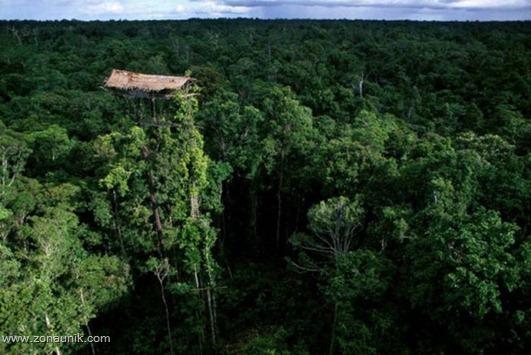 Rumah pohon (4)