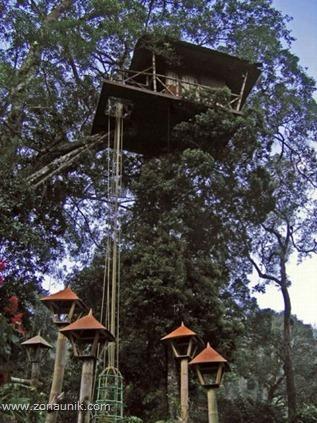 Rumah pohon (6)