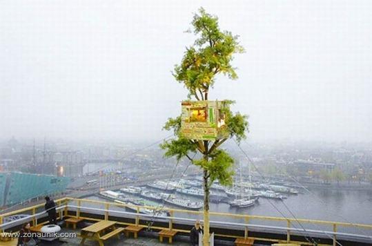 Rumah pohon (11)