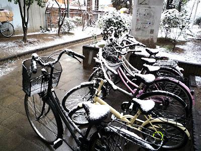 nieve, nevada, Fukuoka, Tenjin, Kego, Hirao, invierno, 雪, 福岡, 警固公園, 天神, 平尾, 冬, snow, winter