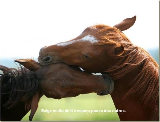 Cavalos 06