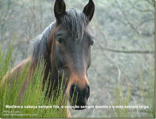 Cavalos 16