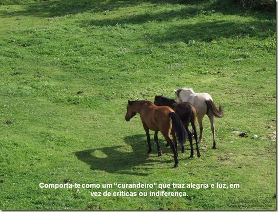 Cavalos 17