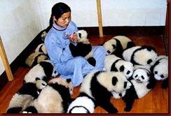 Enem pandas