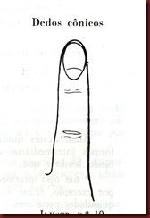 Dedos conicos