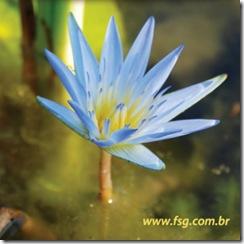 FSG Lotus Azul 2010