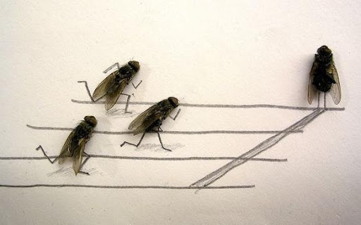 http://lh6.ggpht.com/_bKN77pn74dA/Sth9p2L6MQI/AAAAAAAACyU/rloqRXS1j04/humor-with-dead-flies01.jpg
