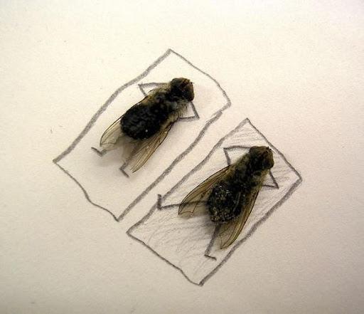 http://lh6.ggpht.com/_bKN77pn74dA/Sth9qLQ9HsI/AAAAAAAACyc/R40eySwyW5c/humor-with-dead-flies03.jpg