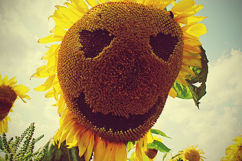 http://lh6.ggpht.com/_bKN77pn74dA/TMGlzYibJxI/AAAAAAAAEaI/SK8Y2rKUcjM/flower%20power.jpg