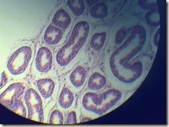 Stereocilia microscope view