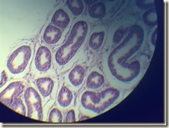 Stereocilia microscope view_thumb