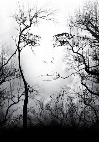 alberi viso