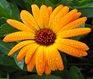 tanaman_sehat_aman