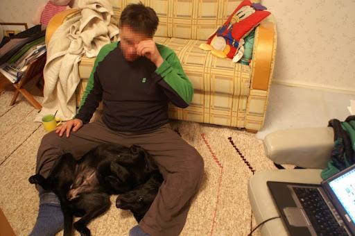 labradorinnoutaja rentoutuu