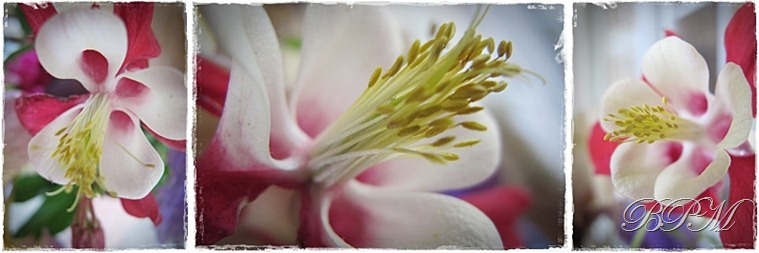 flowersABC