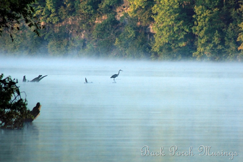 ozark morning3A