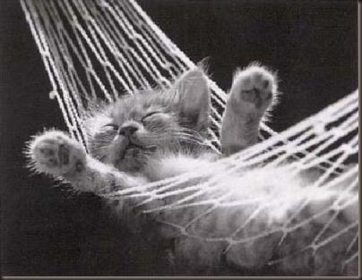 cat-nap-hammock