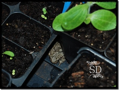 Coldframe Toad 5-11