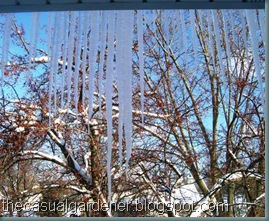 Icy View 09