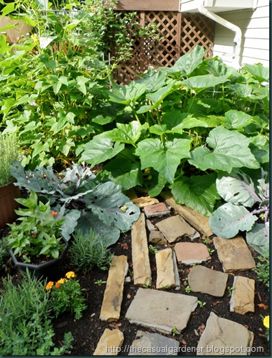Huge Zucchini and Garden Path Gone Missing