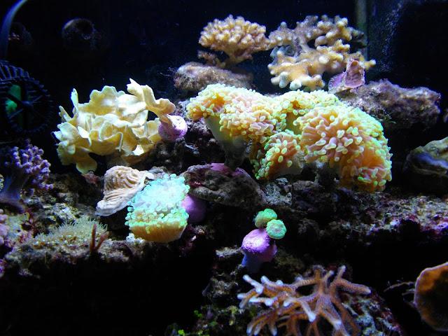 Mon jardin de corail