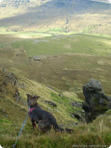 wild boar fell scarp and hound