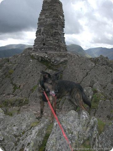dog cairn cairn dog cairn