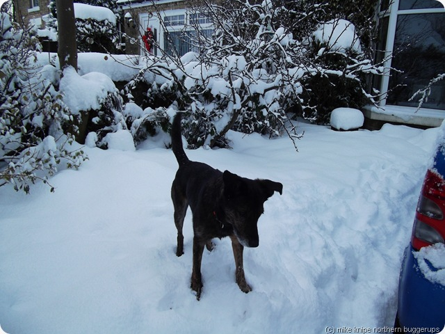 snowday 008