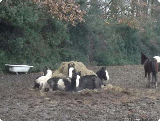 my little pony island