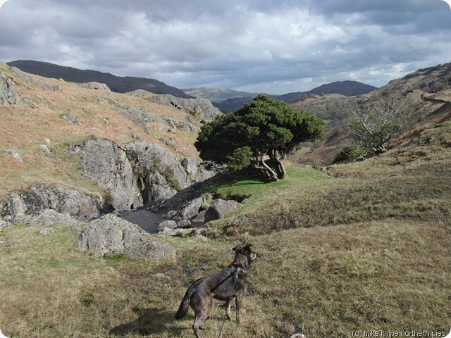 juniper and dawg by sour milk gill