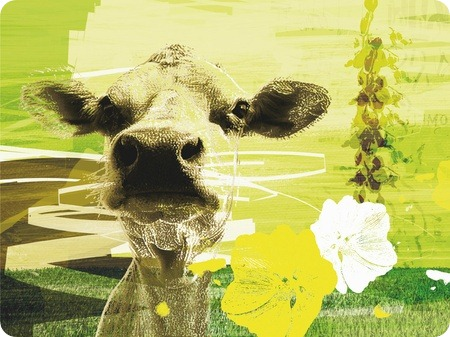 Homeless Cow digitalt bilde, av -HAPPY HOME WALL- 2800kr