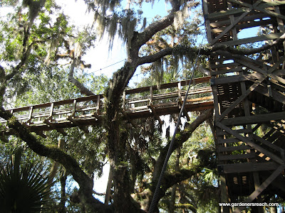 Wordless Wednesday – Myakka Canopy Walkway