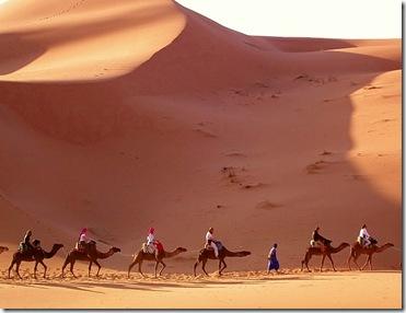 camels_egypt