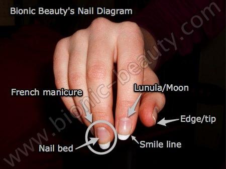 Bionic Beauty's diagram of parts of the fingernails