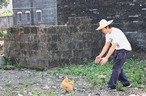 gary_chickens