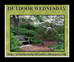 OutdoorWednesdaybutton54333333