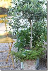 hagen og sneglekrig 014