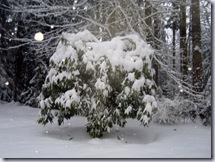 a-Rhodie_snow 1
