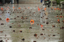 Fallen flowers reflected on the wet pavement of Chaozhou, China