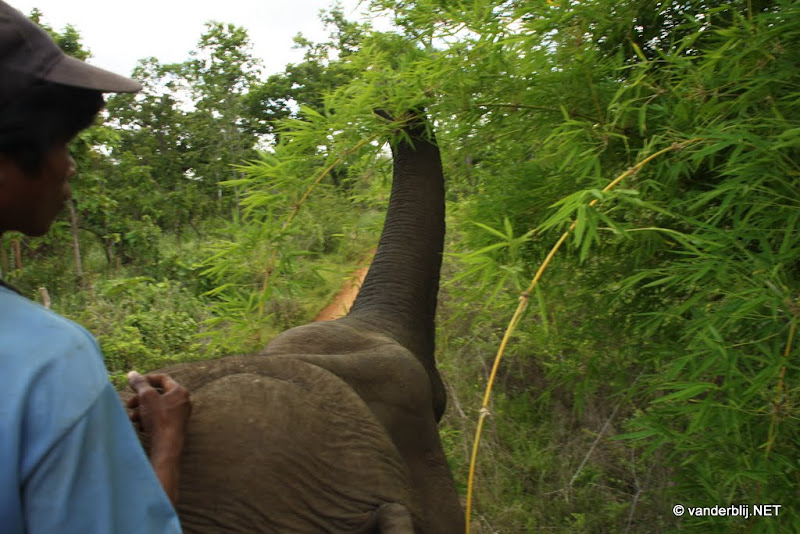 Riding an elephant in the woods near Ban Lung, Cambodia
