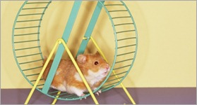 hamster-on-a-wheel